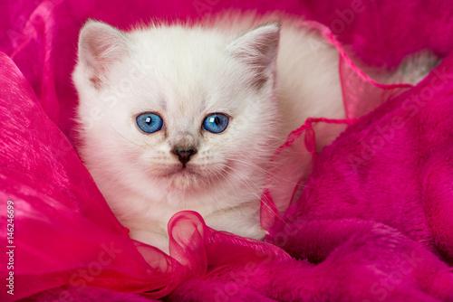 Kätzchen auf rosa Decke Poster