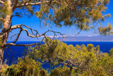 sea panorama to the coast through cypress tree on the sunny day.