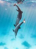 Drei Spinnerdelfine Tollen im Meer