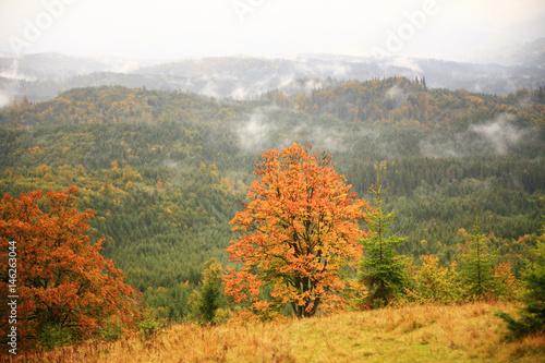 Fototapeta Misty autumn background