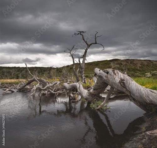 Crooked trees on Tierra del Fuego, Argentina