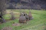 Chickens feeding in rural Romania