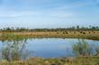 livestock by pond