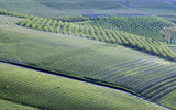 Monferrato, Piedmont,Italy: spring landscape near San Marzano Oliveto