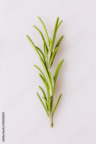 Rosemary garden herb sprig photographed on a white background, Studio Isolated