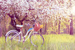spring pastime weekend/ Stop for a picnic under the blossoming apple tree at sunset - 146389094