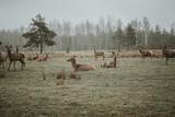 Deer & moose
