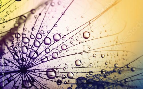 Fototapety, obrazy :  dandelion flower background