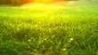 Nature grass background. Green grass in spring park with sun flares backdrop. 4K UHD video 3840X2160