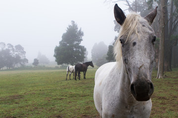 horses in Natal Midlands
