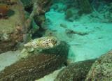 vue sous marine plongee tropique