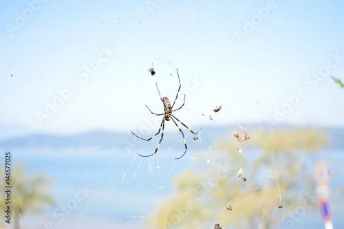 餌を待つクモ
