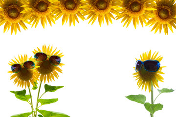 Sunflower with green sunglasses isolated on white background.