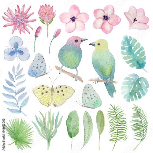 Akwarela zestaw tropikalnych ptaków, kwiatów, liści