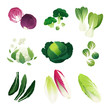 Постер, плакат: Clip art collection of various cabbage types: red cabbage broccoli bok choy cauliflower savoy Brussel sprouts kale leaves endive lettuce and napa cabbage