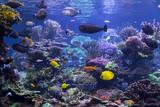Aquarium Reef - 146644614