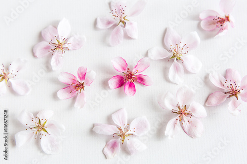 top view on white background filling with sacura flowers Poster