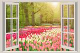 Okno z pięknym wiosną tulipany kwiaty ogród w Holandii.