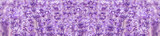 panorama field lavender  summer