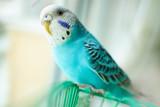 Wavy blue parrot - 146747608