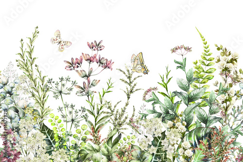 seamless rim. Border with Herbs and wild flowers, leaves. Botanical Illustration Colorful illustration on white background. Spring composition with butterfly - 146778215