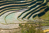 Rice fields on terraced mountains