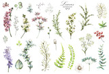 Big Set watercolor elements - wildflowers, herbs, leaf. collection garden and wild herb, flowers, branches.  illustration isolated on white background, eucalyptus, exotic, tropical leaf. Green. - 146789025