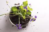 plants in petri dish - 146884284