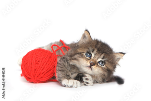 Poster Playful Kitten With Red Ball of Yarn