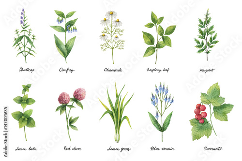 Fototapeta Hand drawn watercolor set of herbs and spices.