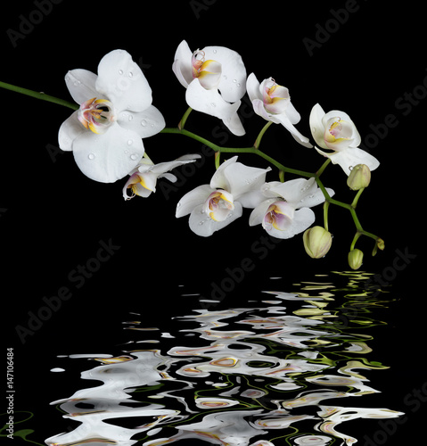 White Orchid on a black background reflected in a water - 147106484