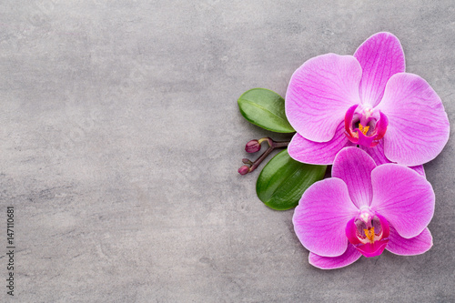 Pink orchid on the grey background.