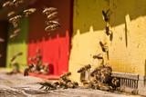 Bienen im Bienenstock - Bestäubung der Blüten