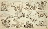 BEARS - An hand drawn vector pack, line art - 147271462