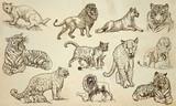 CATS - An hand drawn vector pack, line art - 147272688
