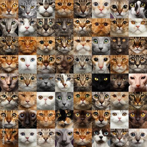 Kolaż przedstawiający różne 64 twarze kotów, kwadratowe portrety głów grup