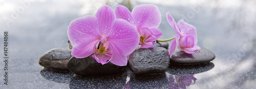 canvas print picture Pink orchid and black stones close up.