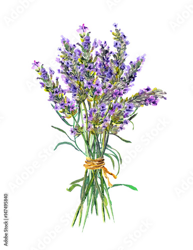 Lavender flowers bunch. Watercolor - 147495840