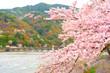 桜が咲く嵐山