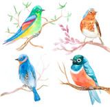 set of watercolor birds in spring on white