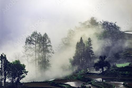 Yunnan yuanyang terrace - 147578615