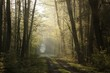 Rural road through the spring forest at dawn
