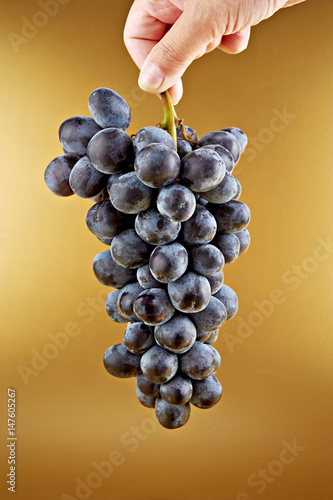 Bunch of grapes isolated on gold background Poster