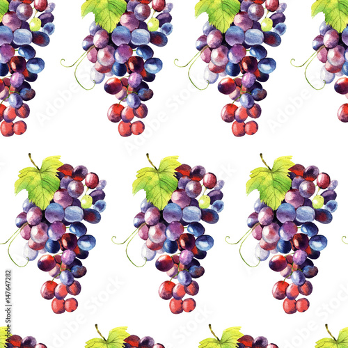 Watercolor grape - 147647282