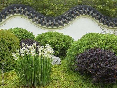 Fototapeta Iris in a Chinese walled garden