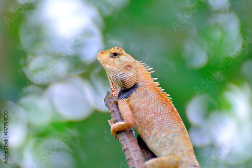 Chameleon on a branch. Poster
