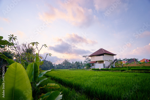 Fotobehang Purper Beautiful landscape with green rice field and houses. Bali, Indonesia.