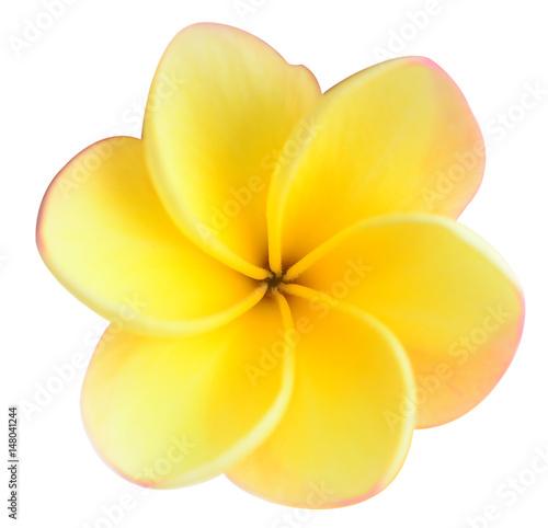 Fotobehang Plumeria frangipani
