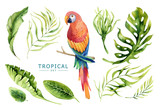 Hand drawn watercolor tropical plants set and  parrot. Exotic pa - 148076481
