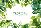 Hand drawn watercolor tropical plants background. Exotic palm leaves, jungle tree, brazil tropic borany elements. Perfect for fabric design. Aloha art.